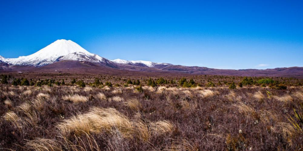 Endlose Tussockgraslandschaft im Tongariro Nationalpark